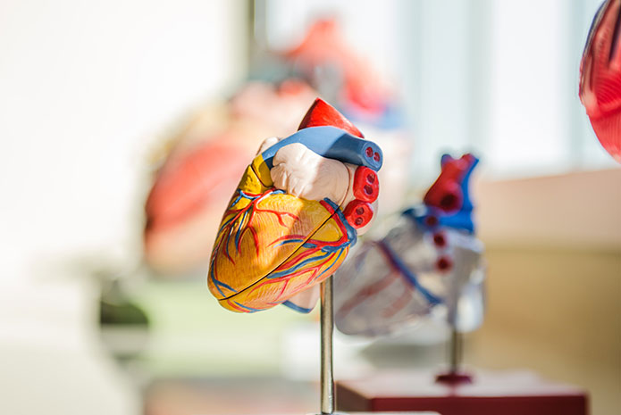 Relación entre la periodontitis y las enfermedades cardiacas