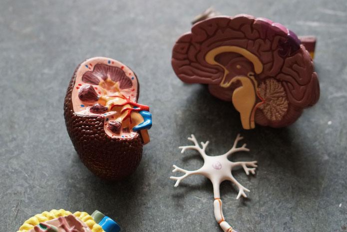 Relación entre el cuidado de la salud oral y el Alzheimer